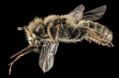 detail včely