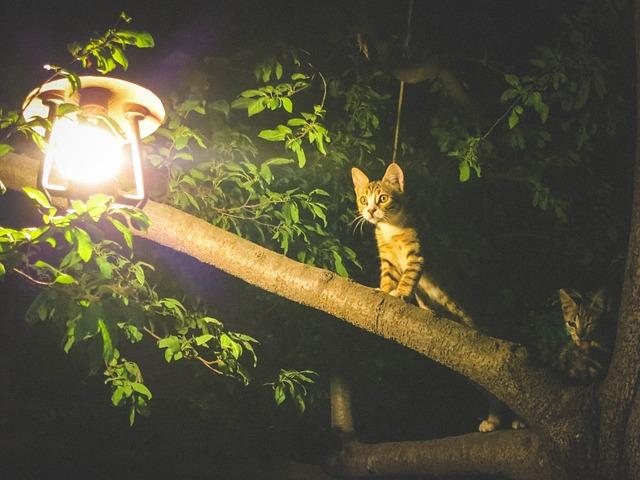kočka na stromě