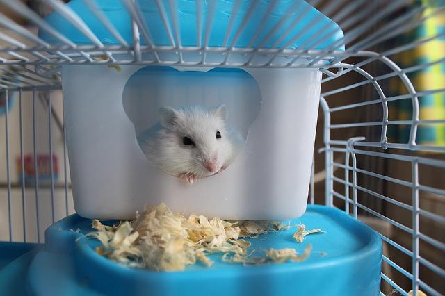 myška v kleci